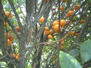 hawaii2007163.jpg