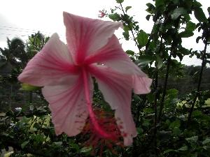 hawaii20072268.jpg